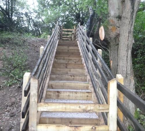 Forrest Steps