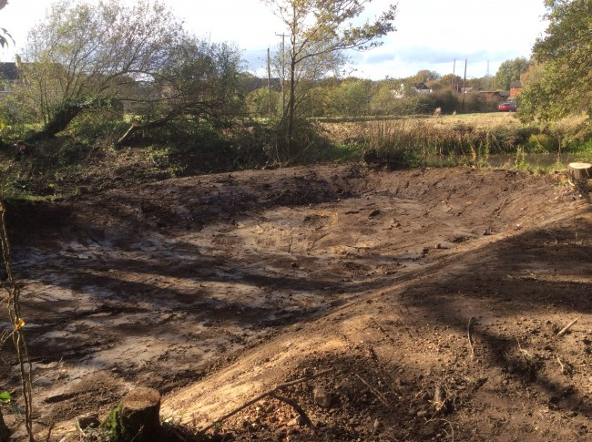 Newt pond clearing